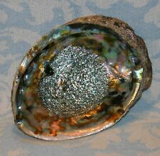 Large, Genuine Abalone Sea Shell With Iridescent Rainbow Colored Interior