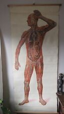 VINTAGE ROLL PULL DOWN MEDICAL SCHOOL CHART OF HUMAN LYMPAHTIC SYSTEM FULL BODY