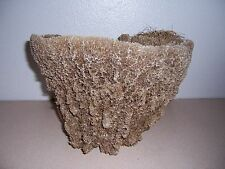 HUGE NEPTUNE'S CUP VASE SEA SPONGE - NAUTICAL DECOR