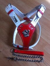 "Bull Terrier Stafff Staffie,leather harness Wid Free Lead red and white 24""-32"""