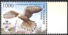 Bielorrusia 2010 Aves/Naturaleza/Raptors/cernícalo/Conservación de Vida Silvestre/1v (n28434)