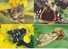 Faroe Islands 1993 Official Issue postcards, Butterflies & Moths set unused