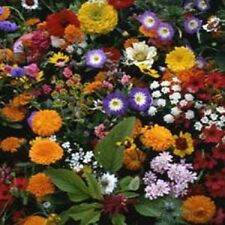 500 Seeds Wildflowers Japanese Mix Wild Flowers