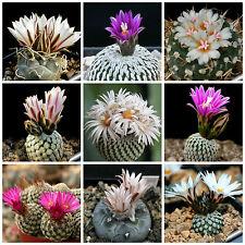20 semi in miscuglio di Turbinicarpus mix ,piante grasse,seed cactus mix