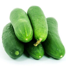 20 Fruit Sweet Cucumber Seeds Mini Cuke Cucumis Sativus Organic Vegetables C100