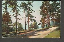 1919 post card Old Pine Trees on Lake Road Cooperstown NY/Edmeston to New Berlin