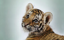 Framed Print - Tiger Cub Super Cute (Picture Poster Animal Puppy Art Lion Cat)
