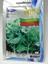 10 g 2260 seeds Chinese Kale Thai Vegetable Plant Chia Tai