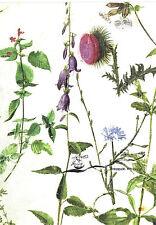 Kunstpostkarte  -  Albrecht Dürer:  Studien von Wildblumen