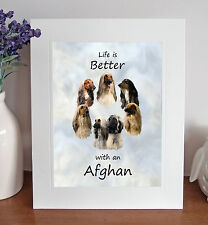 """Afghan Hound 'Life is Better' 10"""" x 8"""" Mounted Picture Print Dog Pet Gift Idea"""