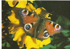 Animal Postcard - Insect - The Peacock - Inachis Io - Butterfly Farm   AB1811