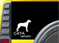 Catahoula What K446 6 inch Sticker Louisiana Catahoula dog decal