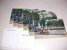 1950s FISH FARM HATCHERY CHAUTAUQUA LAKE NY. UNUSED POSTCARD LOT of 14