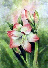 Pretty Amarylis flower  painting reproduction print 8 x 10 on linen card stock