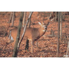 "Delta Large Game Paper Target, Whitetail Deer, 28"" x 42"""