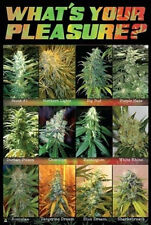 WHAT'S YOUR PLEASURE - MARIJUANA POSTER - 24x36 SHRINK WRAPPED - WEED POT 3089