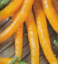 0.1g (approx. 15) hot Thai pepper seeds KILIAN nice orange color, medium hot