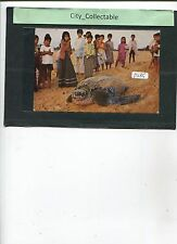 P285 # MALAYSIA USED PICTURE POST CARD * TURTLE WATCHING AT RANTAU ABANG