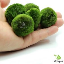 5 Moss Balls +1ExtraFREE live aquarium plants Marimo Ball shrimps fish tank nano