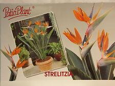 Paradiesvogelblume, Strelitzia reginae ,Zimmerpflanze, Blumenversand