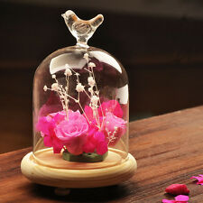 Bird Glass Cloche Dome Cover Display Terrarium Container Miniature Bell Wood