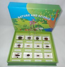 12 BUG Specimen Box Set (in 12 clear blocks) - Education Insect Collection Kit