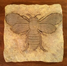 Faux Bug Fossil Primitive Insect Wall Plaque