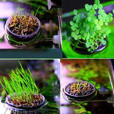 Fish Tank Leaf Plant Growing Pot Bowl Holder Mini Seeds with Sucker