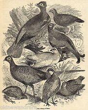 ORIGINALE c1845 Print GIOCO Bird Tiro Agricoltura la caccia di Pernici Fagiani Quaglie