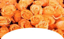 20water slide nail art french tips orange roses  Trending