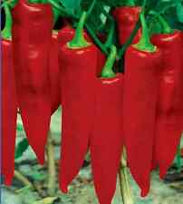 50X Hot Rare Fresh Vegetable Plant Garden Seeds Red Spicy Chili Pepper Spices