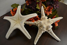 "WHITE KNOBBY STARFISH WEDDING BEACH SEA SHELL CRAFT 8"" 7418B"