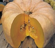 Heirloom AUSTRALIAN BUTTER SQUASH Rare❋12 SEEDS❋Tasty Quality❋COMBINE SHIPPING*
