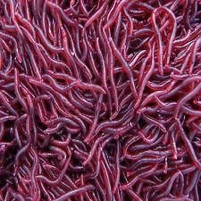 50pcs Soft Earthworm Fishing Lures Clam Worm Crankbaits Jig Big Bait Fish Tackle