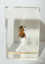 Honey Bee (Apis mellifera) - Insect Specimen (Clear Lucite Paperweight)