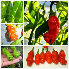 30Pcs /Lot Peter Pepper Seeds Pornographic Special Vegetable Garden Chili Plant