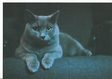 Animals Postcard - Cats - Yvonne's Cat - Laying Down    DD908