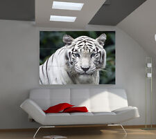 "Tiger White Huge Art Giant Poster Wall Print 39""x57"" a571"