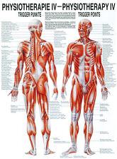 Triggerpunkte poster 24cm x 34cm von Rüdiger Anatomie