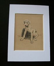 Terrier? Mutt Dog Print Cecil Aldin Bookplate 1902 Puppy Feeling Sick Matted