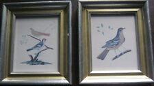 Art - Vintage Framed  Bird Prints - Set of 2