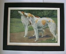 Russian Wolfhounds Dog Print Louis Fuertes On Alert Bookplate 1919 8x10 Matted