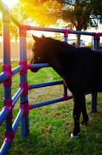 Mini Horse or Pony Portable Corral Corrals -Pens- Panels USA made! Affordable!
