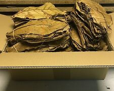 PREISHIT 500g Premium XL Seemandelbaumblätter ✈ VERSANDKOSTENFREI Catappa Leaves