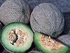 Melon Cantaloupe Heirloom ROCKY FORD 100 SEEDS Eden Gem Nutmeg Fragrant Vigorous