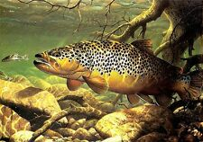 """3.25"""" Lunker Brown Trout art Sticker / decal. Fly fishing river wildlife outdoor"""