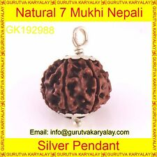 Mantra Siddha Natural Sat Mukhi 7 Seven Face Rudraksh In Silver Pendant 15-17 MM