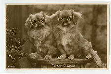 c 1920 British Photo Postcard PRECIOUS PLAYMATES Pekingese Pups Vintage