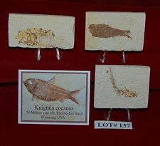 Fossil Fish KNIGHTIA 50 Million Year Old 3 Plaques+Stands+ID Card Lot#137
