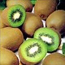 * KIWI FRUIT VINE *  ORGANIC NON-GMO!!  10 SEEDS